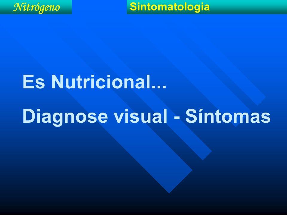 Nitrógeno Sintomatologia Es Nutricional... Diagnose visual - Síntomas