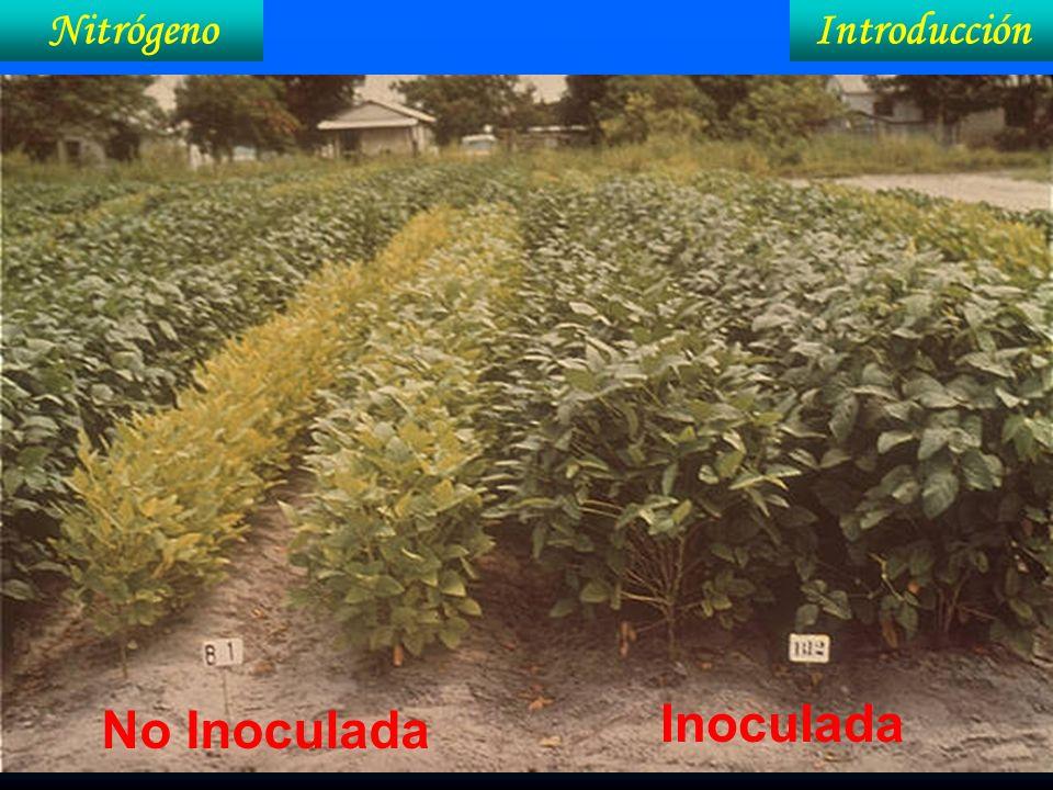 IntroducciónNitrógeno En el campo, cómo saber que la FBN está adecuada.