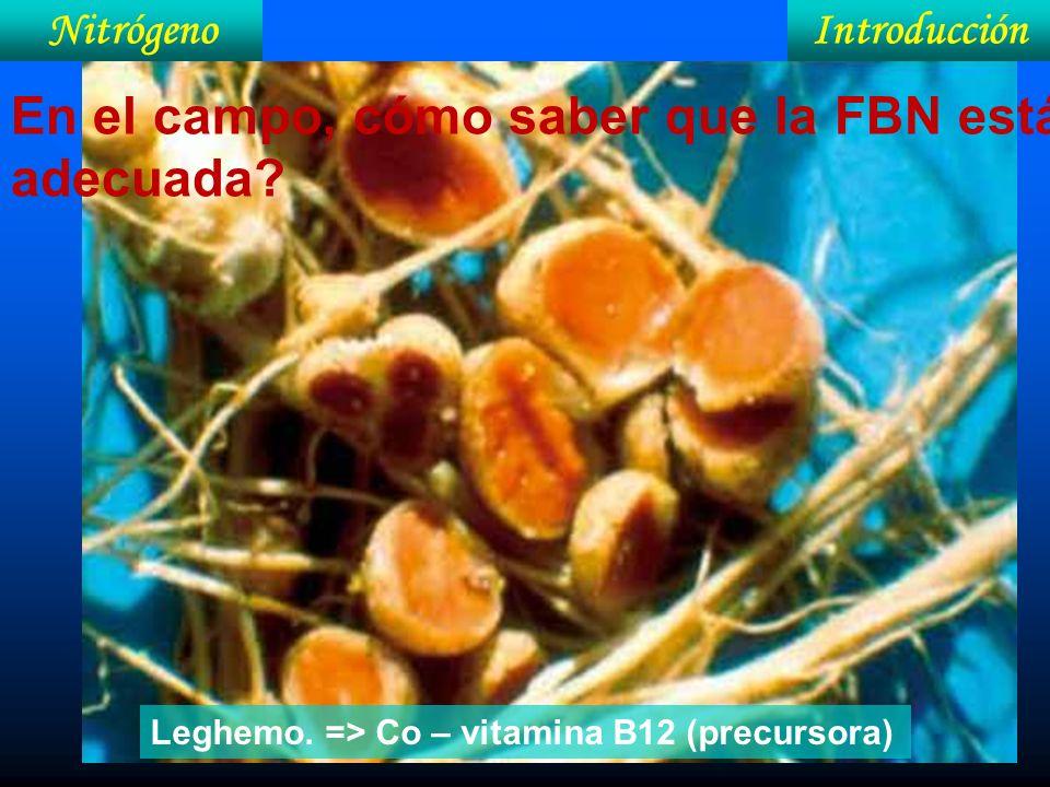 IntroducciónNitrógeno En el campo, cómo saber que la FBN está adecuada? Leghemo. => Co – vitamina B12 (precursora)