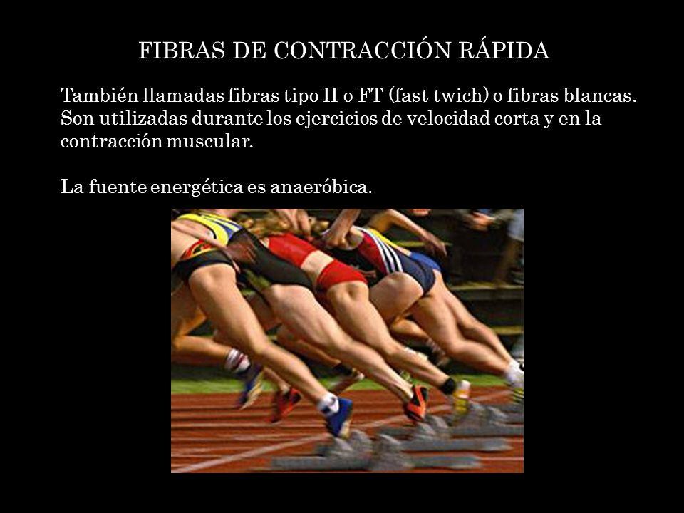 FIBRAS DE CONTRACCIÓN RÁPIDA También llamadas fibras tipo II o FT (fast twich) o fibras blancas. Son utilizadas durante los ejercicios de velocidad co