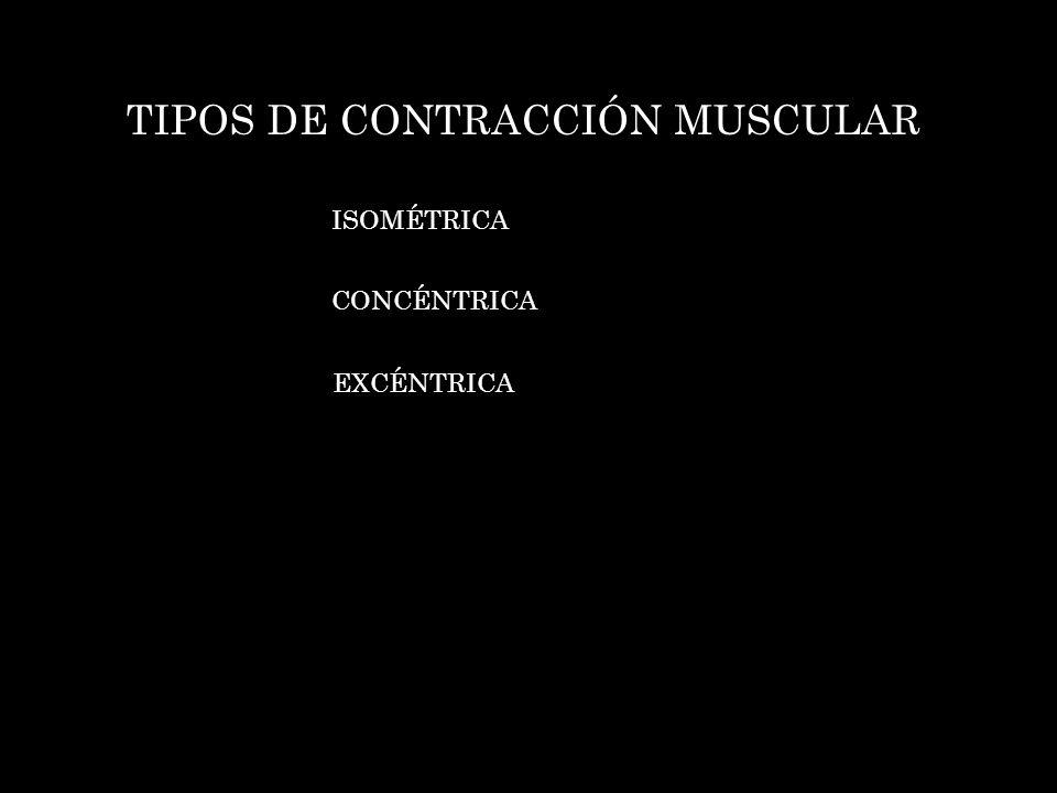 TIPOS DE CONTRACCIÓN MUSCULAR ISOMÉTRICA CONCÉNTRICA EXCÉNTRICA