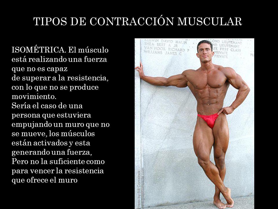 TIPOS DE CONTRACCIÓN MUSCULAR ISOMÉTRICA. El músculo está realizando una fuerza que no es capaz de superar a la resistencia, con lo que no se produce