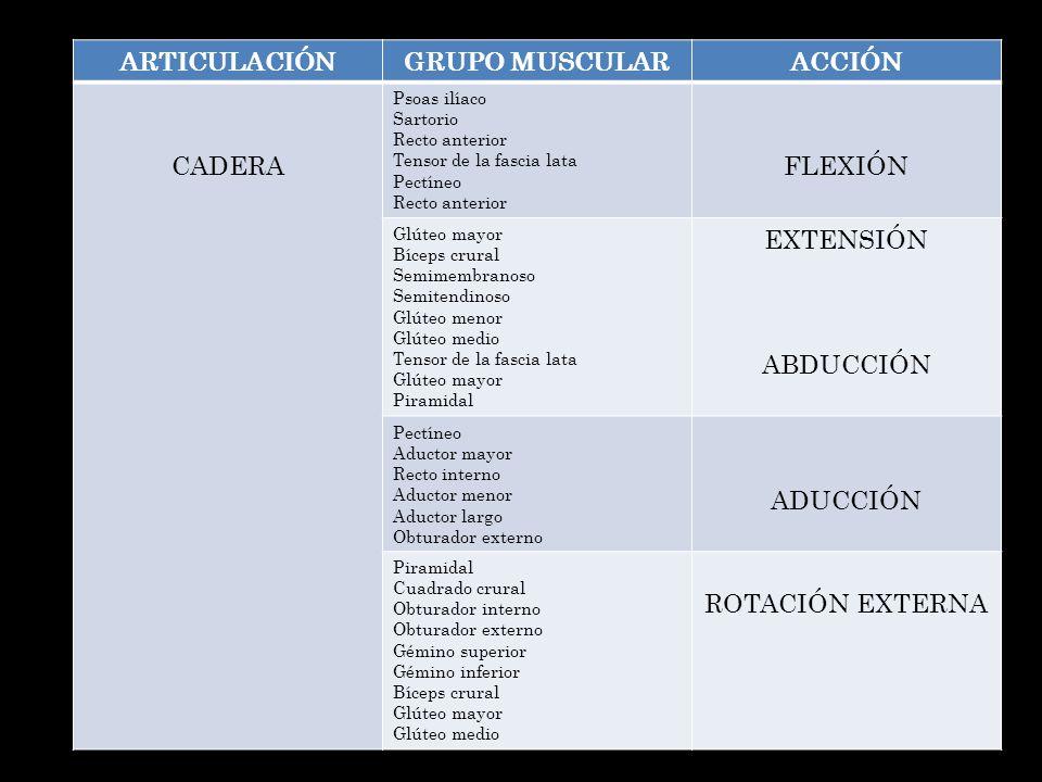ARTICULACIÓNGRUPO MUSCULARACCIÓN CADERA Psoas ilíaco Sartorio Recto anterior Tensor de la fascia lata Pectíneo Recto anterior FLEXIÓN Glúteo mayor Bíc