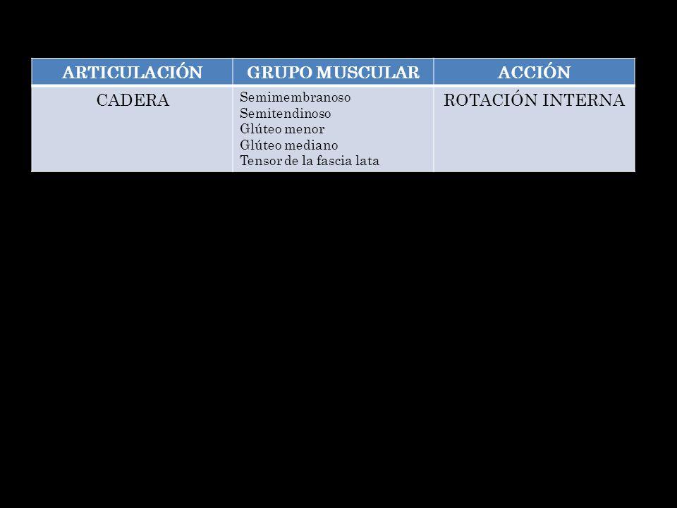 ARTICULACIÓNGRUPO MUSCULARACCIÓN CADERA Semimembranoso Semitendinoso Glúteo menor Glúteo mediano Tensor de la fascia lata ROTACIÓN INTERNA