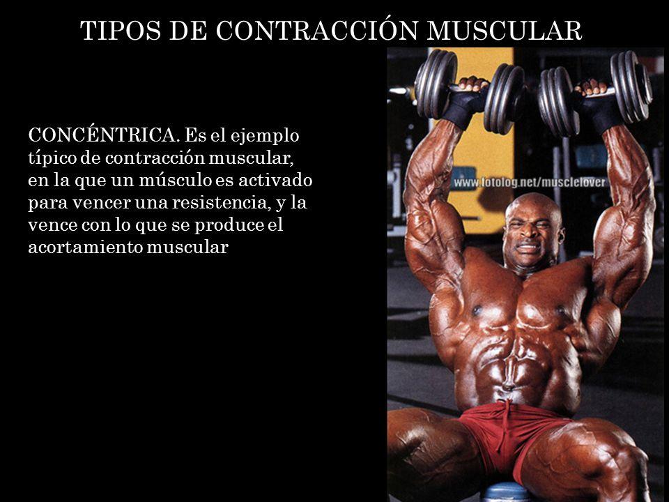 TIPOS DE CONTRACCIÓN MUSCULAR CONCÉNTRICA. Es el ejemplo típico de contracción muscular, en la que un músculo es activado para vencer una resistencia,