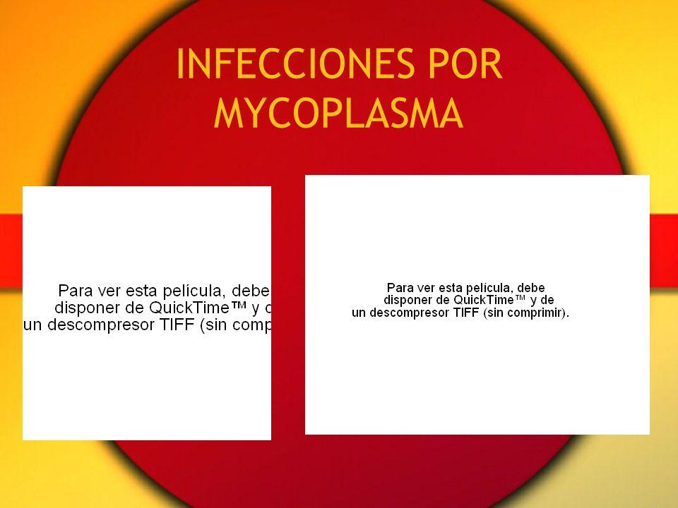INFECCIONES POR MYCOPLASMA