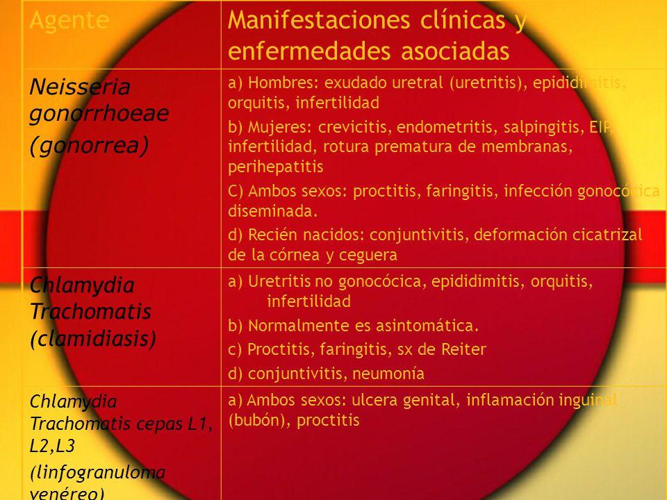 AgenteManifestaciones clínicas y enfermedades asociadas Neisseria gonorrhoeae (gonorrea) a) Hombres: exudado uretral (uretritis), epididimitis, orquitis, infertilidad b) Mujeres: crevicitis, endometritis, salpingitis, EIP, infertilidad, rotura prematura de membranas, perihepatitis C) Ambos sexos: proctitis, faringitis, infección gonocócica diseminada.