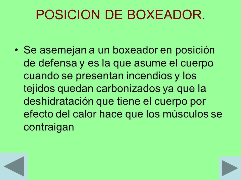 POSICION DE BOXEADOR. Se asemejan a un boxeador en posición de defensa y es la que asume el cuerpo cuando se presentan incendios y los tejidos quedan
