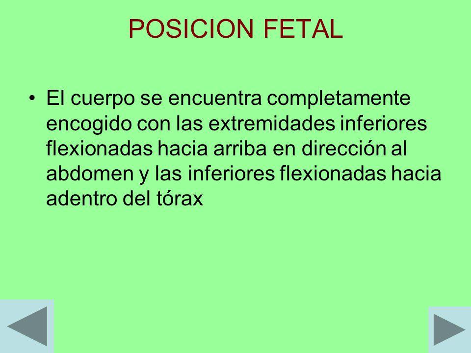 POSICION FETAL El cuerpo se encuentra completamente encogido con las extremidades inferiores flexionadas hacia arriba en dirección al abdomen y las in
