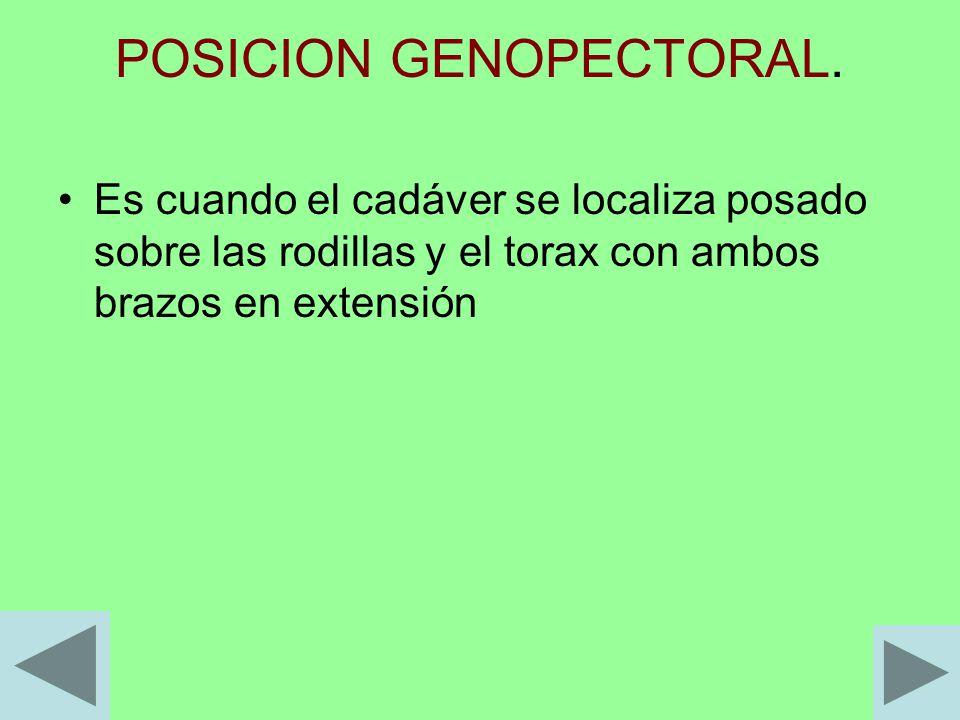 POSICION GENOPECTORAL. Es cuando el cadáver se localiza posado sobre las rodillas y el torax con ambos brazos en extensión