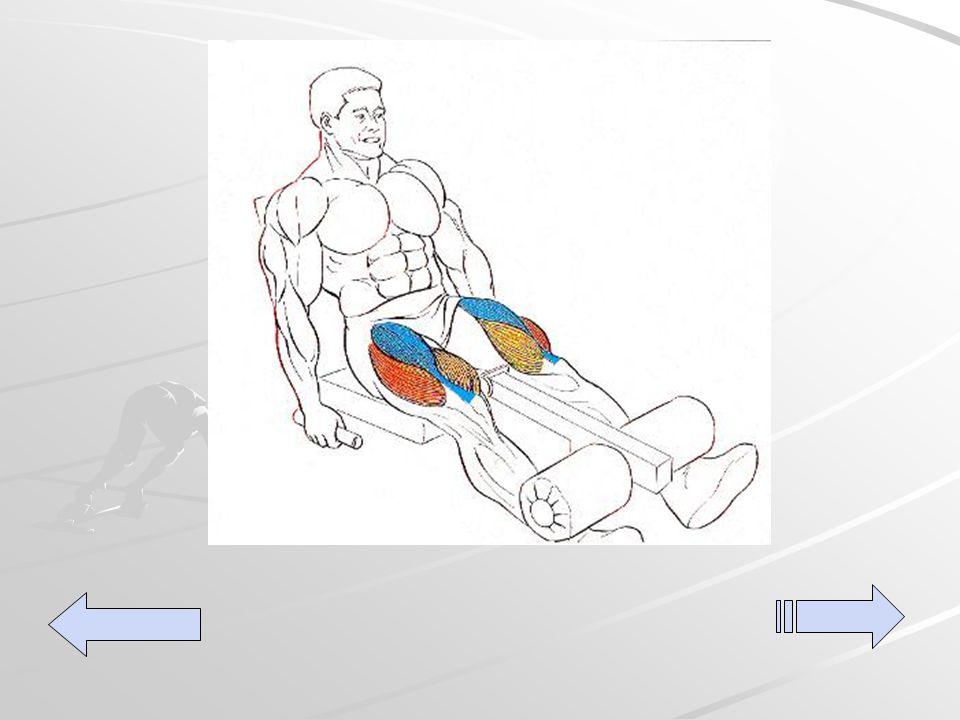 Sentado en la maquina para cuadriceps con el rodillo a la mitad de la pierna, estirar elevando el rodillo y regresar a la posición inicial.