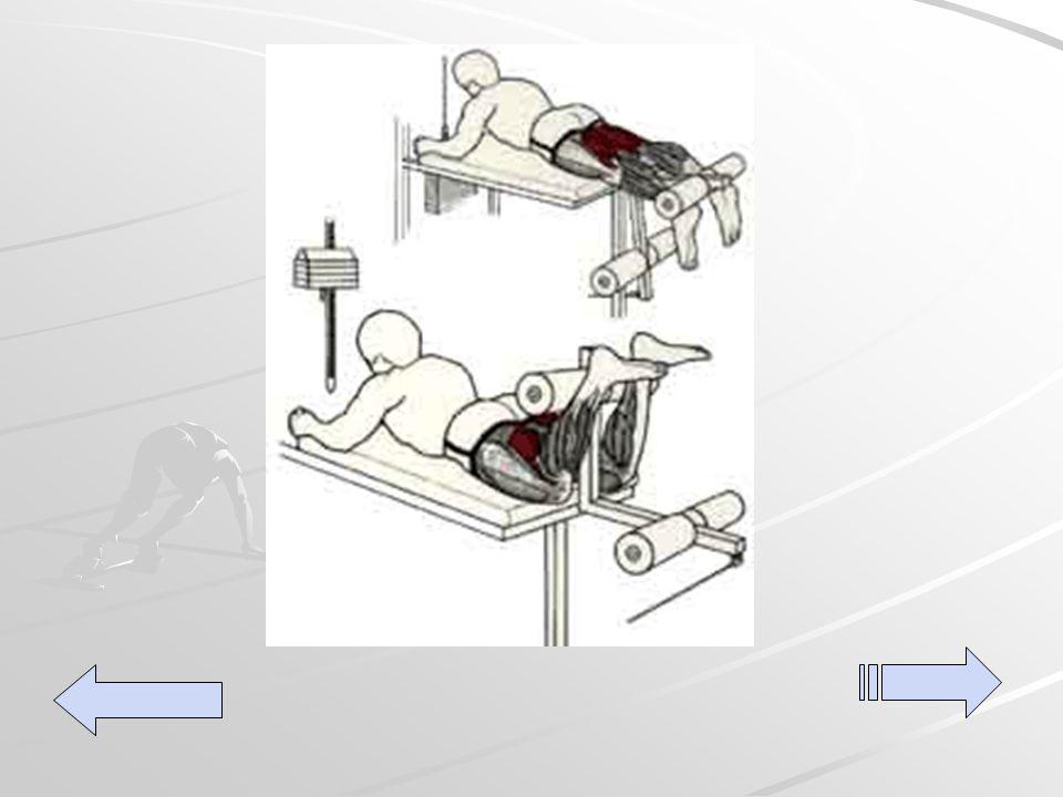 Acostada Acostada Acostada boca abajo en la maquina de colocando las rodillas a la altura de las pantorrillas, elevar lentamente las piernas doblando las rodillas hasta un ángulo recto.