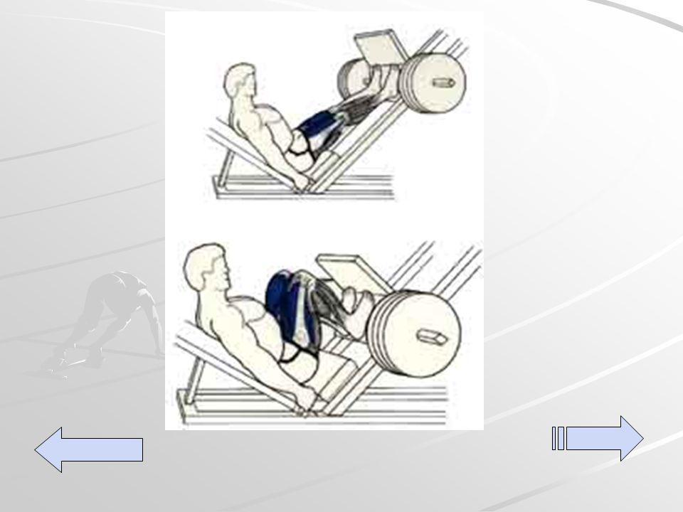 Back legs extension Sentada en la prensa (vertical u horizontal es lo mismo) con las plantas de los pies bien apoyados y las piernas flexionadas, presionar hacia adelante hasta extender las piernas y luego volver a flexionar.