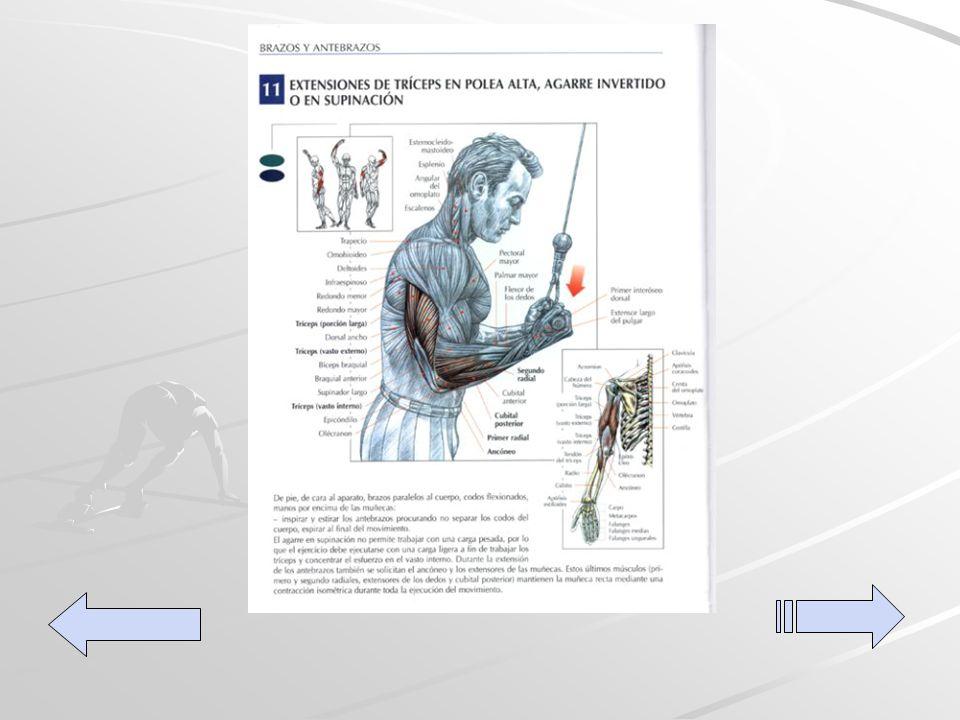 Extensiones de tríceps en polea alta De pie, de cara al aparato, con las manos en el mango y los codos alineados con el cuerpo, efectuar una extensión de los antebrazos procurando no separar los codos del cuerpo.