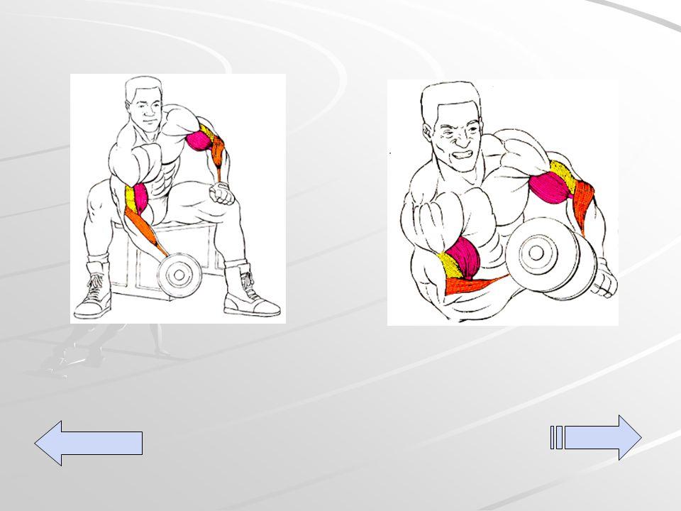Bíceps curls Para empezar a trabajar con el bíceps derecho, échate hacia delante y apoya el codo o la mano sobre el muslo izquierdo o en la cadera.