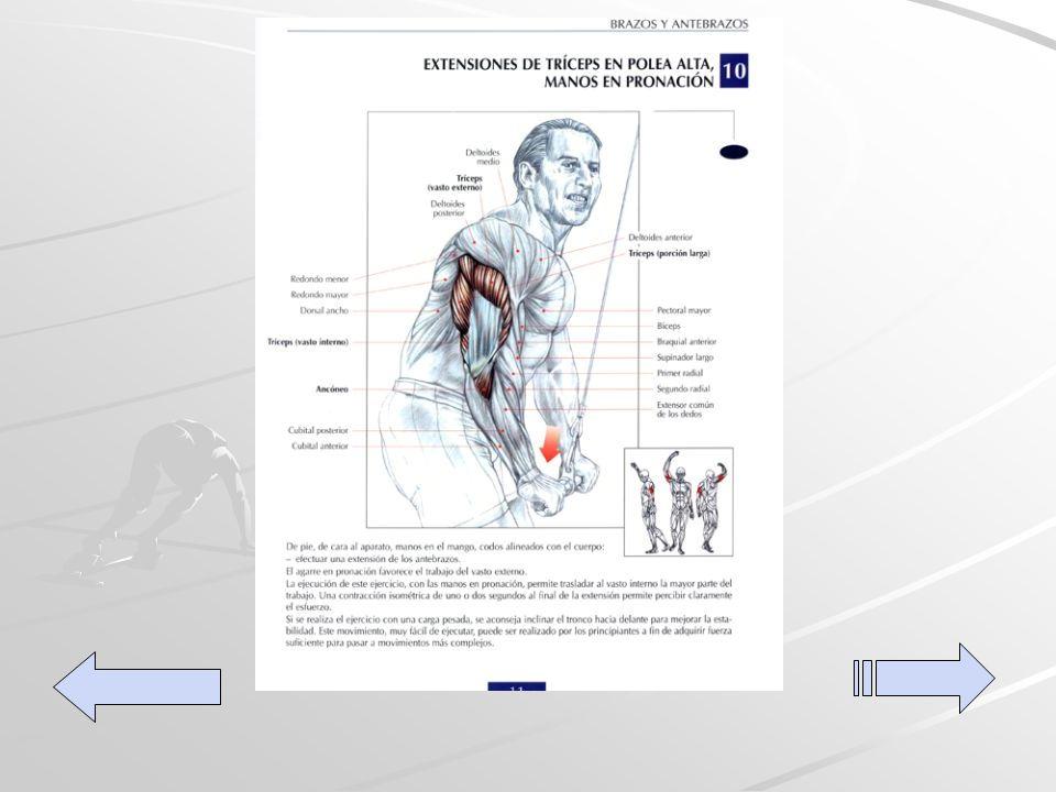 Extensiones de tríceps en polea alta De pie de frente al equipo, manos en la barra codos alineados con el cuerpo efectuar una extensión con los antebrazos.