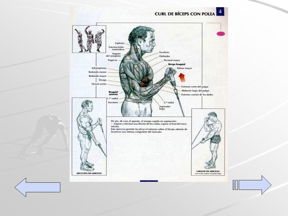 Extensiones de tríceps en polea alta Con este ejercicio trabajamos el tríceps y el ancóneo, se puede hacer con el agarre al revés; es decir, con las palmas hacia arriba trabajando la cabeza interior del tríceps.