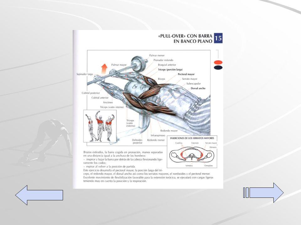 Pull-over con barra Este ejercicio implica el grosor del pectoral, el tríceps y el dorsal ancho, así como los serratos mayores, el romboide y el pectoral menor.