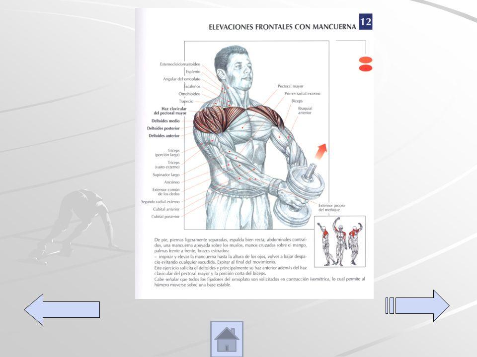 Elevaciones frontales con dumber De pies piernas ligeramente separados espalda derecha, abdomen contraído levanta el peso hasta elevar los brazos a la altura de los hombros.