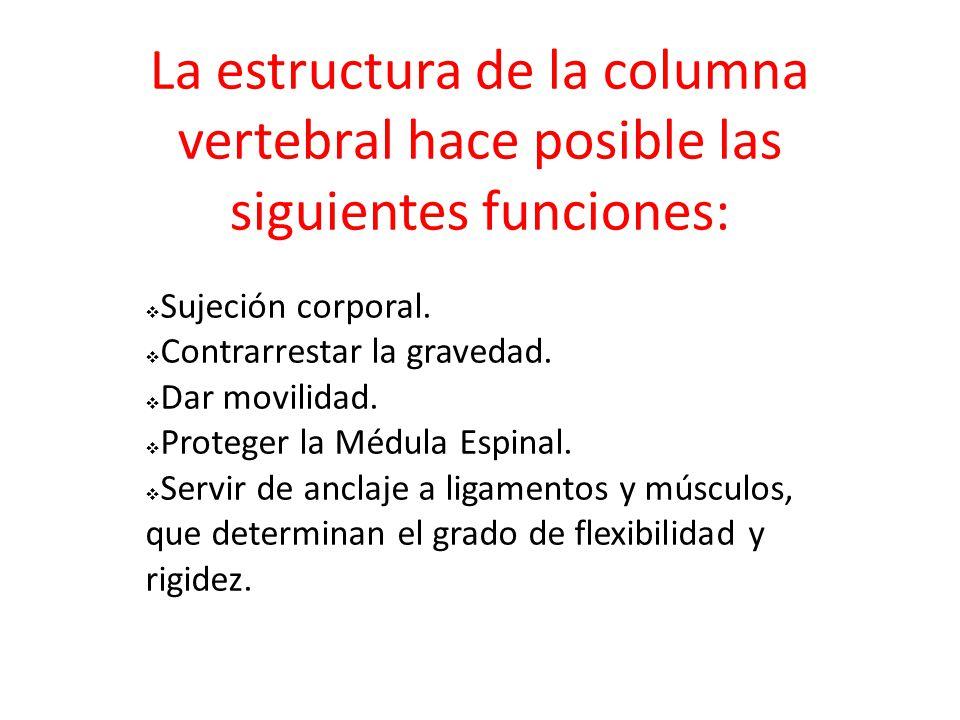 La estructura de la columna vertebral hace posible las siguientes funciones:  Sujeción corporal.  Contrarrestar la gravedad.  Dar movilidad.  Prot