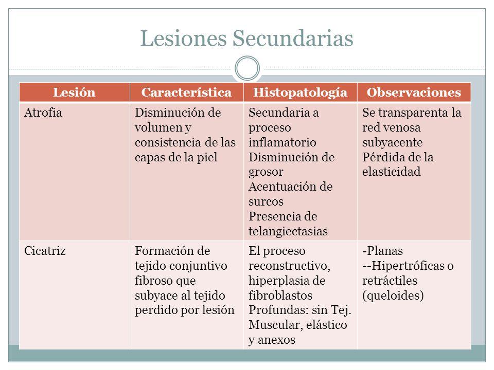 Lesiones Secundarias LesiónCaracterísticaHistopatologíaObservaciones AtrofiaDisminución de volumen y consistencia de las capas de la piel Secundaria a