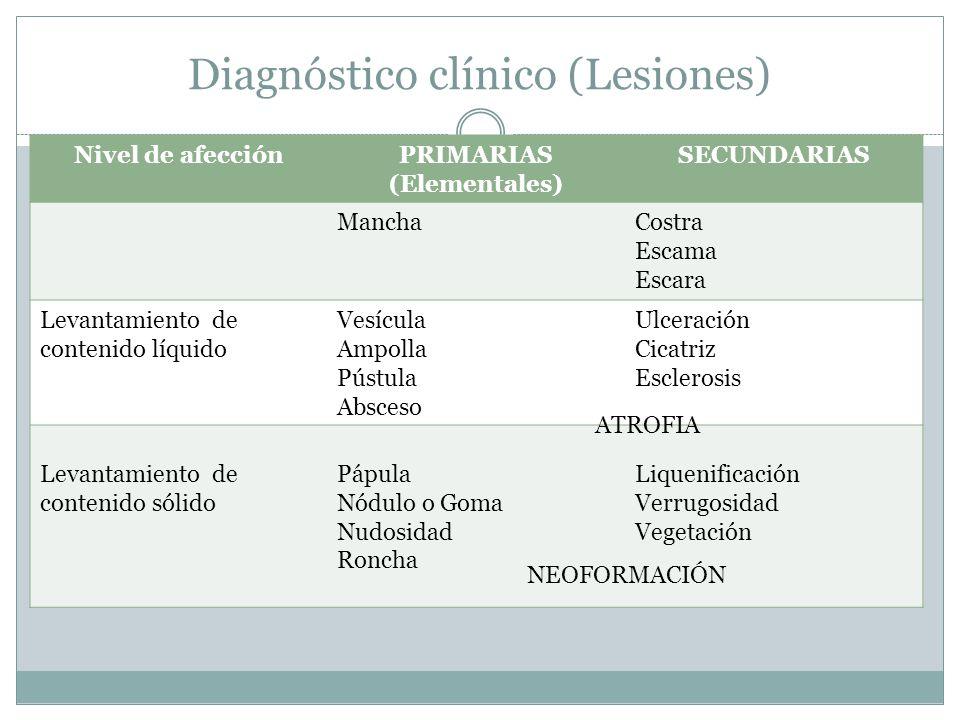 Diagnóstico clínico (Lesiones) Nivel de afecciónPRIMARIAS (Elementales) SECUNDARIAS ManchaCostra Escama Escara Levantamiento de contenido líquido Vesí
