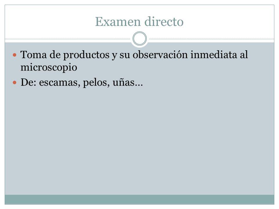 Examen directo Toma de productos y su observación inmediata al microscopio De: escamas, pelos, uñas…