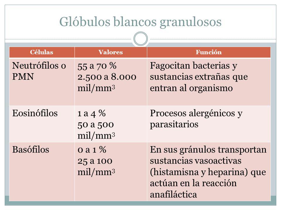 Glóbulos blancos granulosos CélulasValoresFunción Neutrófilos o PMN 55 a 70 % 2.500 a 8.000 mil/mm 3 Fagocitan bacterias y sustancias extrañas que entran al organismo Eosinófilos1 a 4 % 50 a 500 mil/mm 3 Procesos alergénicos y parasitarios Basófilos0 a 1 % 25 a 100 mil/mm 3 En sus gránulos transportan sustancias vasoactivas (histamisna y heparina) que actúan en la reacción anafiláctica