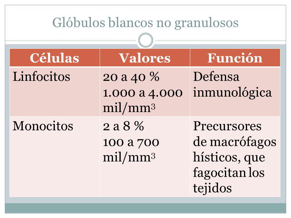 Glóbulos blancos no granulosos CélulasValoresFunción Linfocitos20 a 40 % 1.000 a 4.000 mil/mm 3 Defensa inmunológica Monocitos2 a 8 % 100 a 700 mil/mm 3 Precursores de macrófagos hísticos, que fagocitan los tejidos