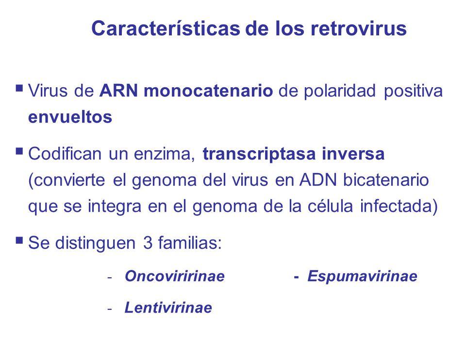 Características de los retrovirus  Virus de ARN monocatenario de polaridad positiva envueltos  Codifican un enzima, transcriptasa inversa (convierte el genoma del virus en ADN bicatenario que se integra en el genoma de la célula infectada)  Se distinguen 3 familias: - Oncoviririnae- Espumavirinae - Lentivirinae