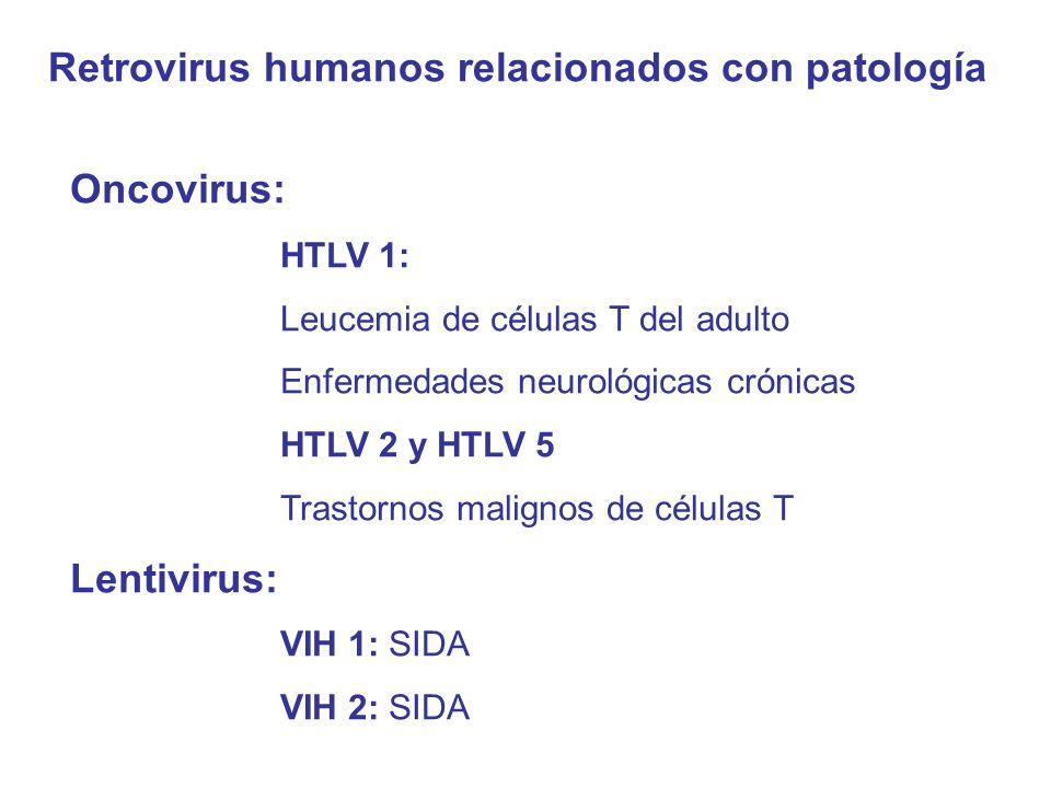 Retrovirus humanos relacionados con patología Oncovirus: HTLV 1: Leucemia de células T del adulto Enfermedades neurológicas crónicas HTLV 2 y HTLV 5 Trastornos malignos de células T Lentivirus: VIH 1: SIDA VIH 2: SIDA