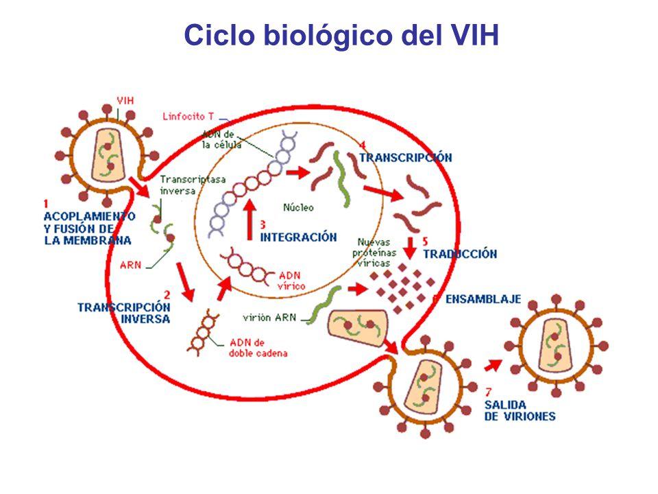 Ciclo biológico del VIH