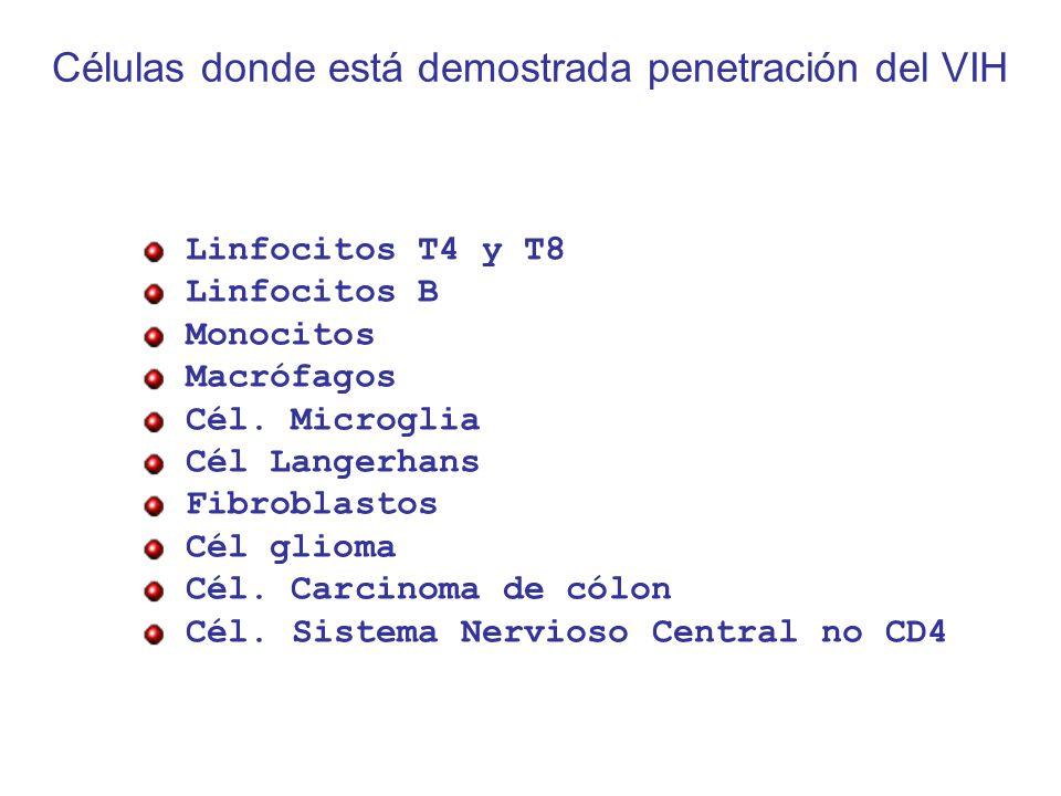 Células donde está demostrada penetración del VIH Linfocitos T4 y T8 Linfocitos B Monocitos Macrófagos Cél.