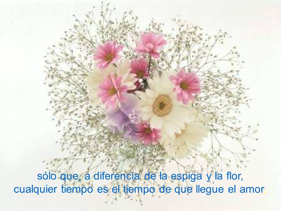 sólo que, a diferencia de la espiga y la flor, cualquier tiempo es el tiempo de que llegue el amor.