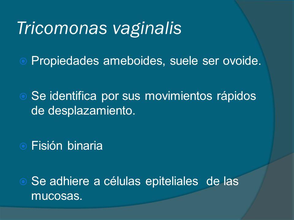Tricomonas vaginalis  Propiedades ameboides, suele ser ovoide.  Se identifica por sus movimientos rápidos de desplazamiento.  Fisión binaria  Se a