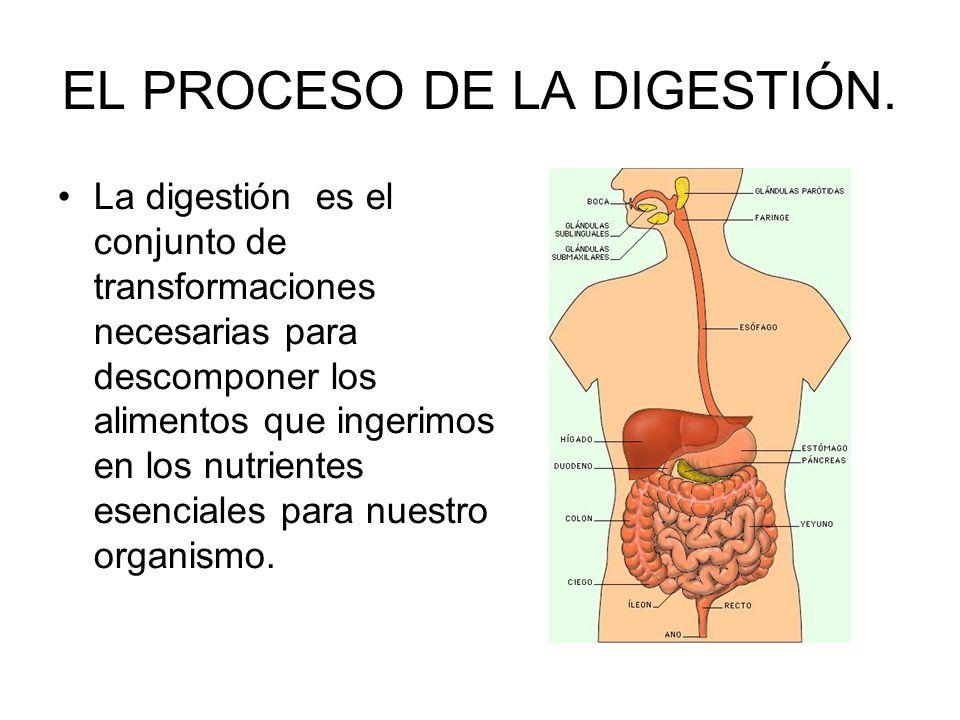 EL PROCESO DE LA DIGESTIÓN. La digestión es el conjunto de transformaciones necesarias para descomponer los alimentos que ingerimos en los nutrientes