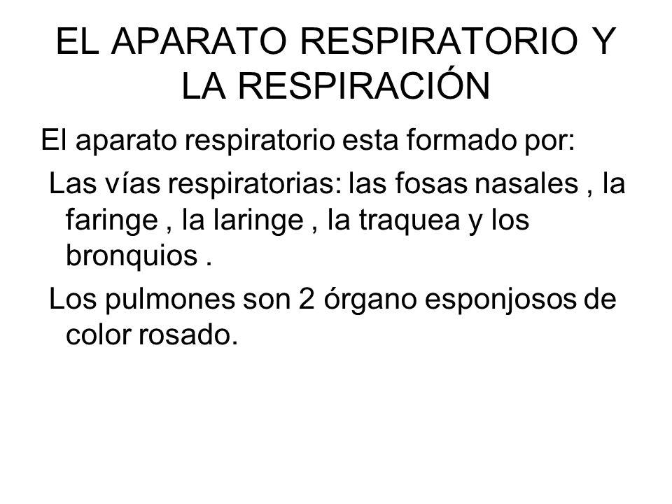 EL APARATO RESPIRATORIO Y LA RESPIRACIÓN El aparato respiratorio esta formado por: Las vías respiratorias: las fosas nasales, la faringe, la laringe,