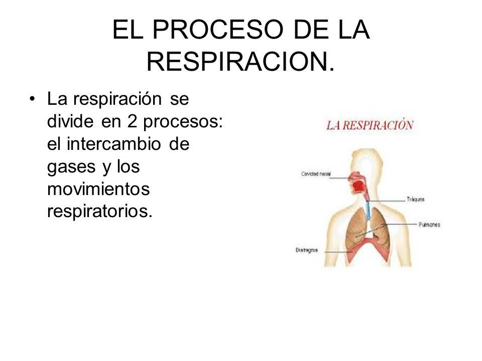 EL PROCESO DE LA RESPIRACION. La respiración se divide en 2 procesos: el intercambio de gases y los movimientos respiratorios.