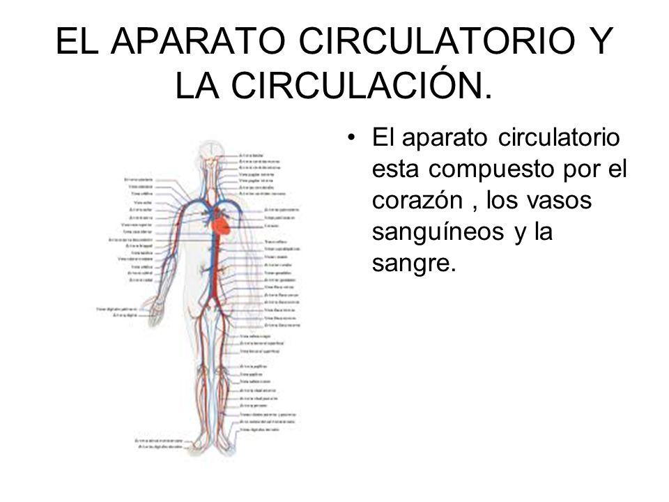 EL APARATO CIRCULATORIO Y LA CIRCULACIÓN. El aparato circulatorio esta compuesto por el corazón, los vasos sanguíneos y la sangre.