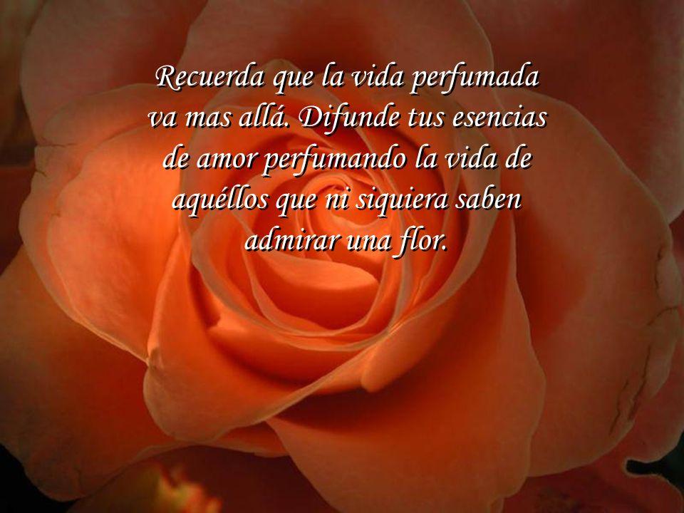 Las flores sea de día o sea de noche, con lluvia o con sol, envían al aire que respiramos todo el perfume que contienen