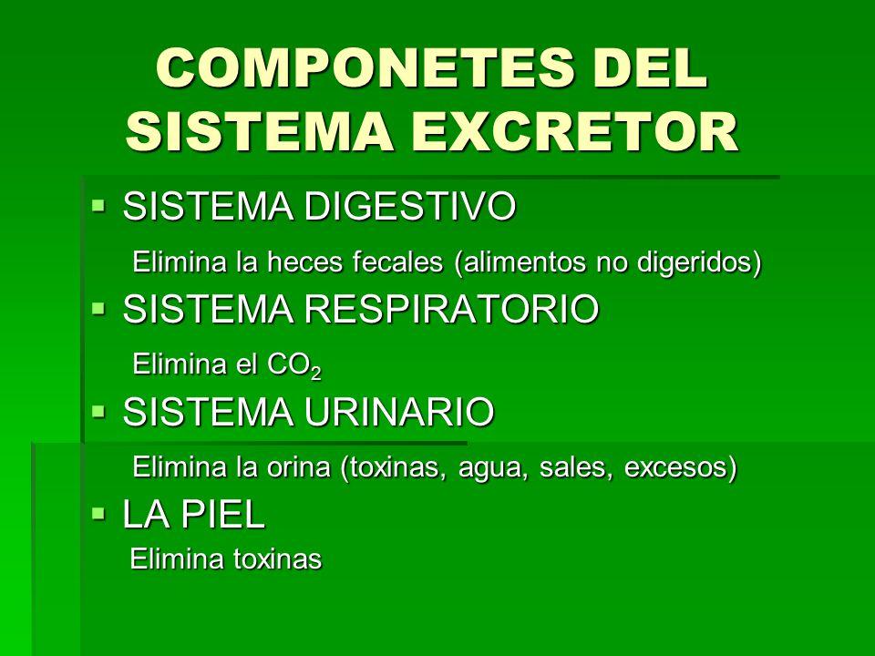 COMPONETES DEL SISTEMA EXCRETOR  SISTEMA DIGESTIVO Elimina la heces fecales (alimentos no digeridos) Elimina la heces fecales (alimentos no digeridos)  SISTEMA RESPIRATORIO Elimina el CO 2 Elimina el CO 2  SISTEMA URINARIO Elimina la orina (toxinas, agua, sales, excesos) Elimina la orina (toxinas, agua, sales, excesos)  LA PIEL Elimina toxinas Elimina toxinas