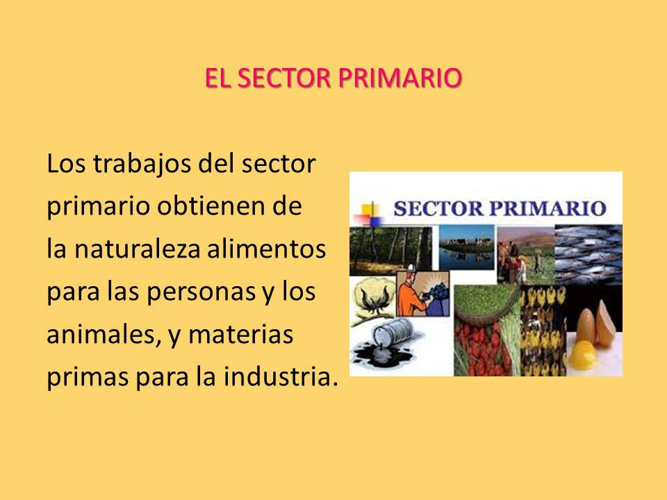 EL SECTOR PRIMARIO Los trabajos del sector primario obtienen de la naturaleza alimentos para las personas y los animales, y materias primas para la industria.