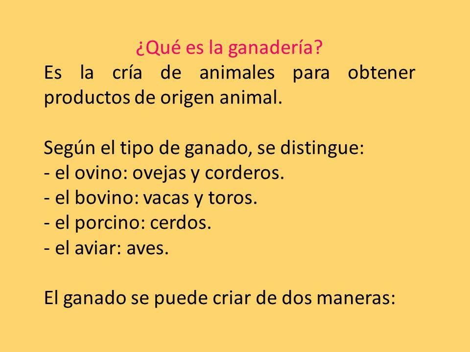 ¿Qué es la ganadería. Es la cría de animales para obtener productos de origen animal.