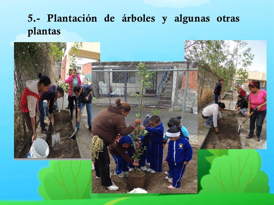 5.- Plantación de árboles y algunas otras plantas