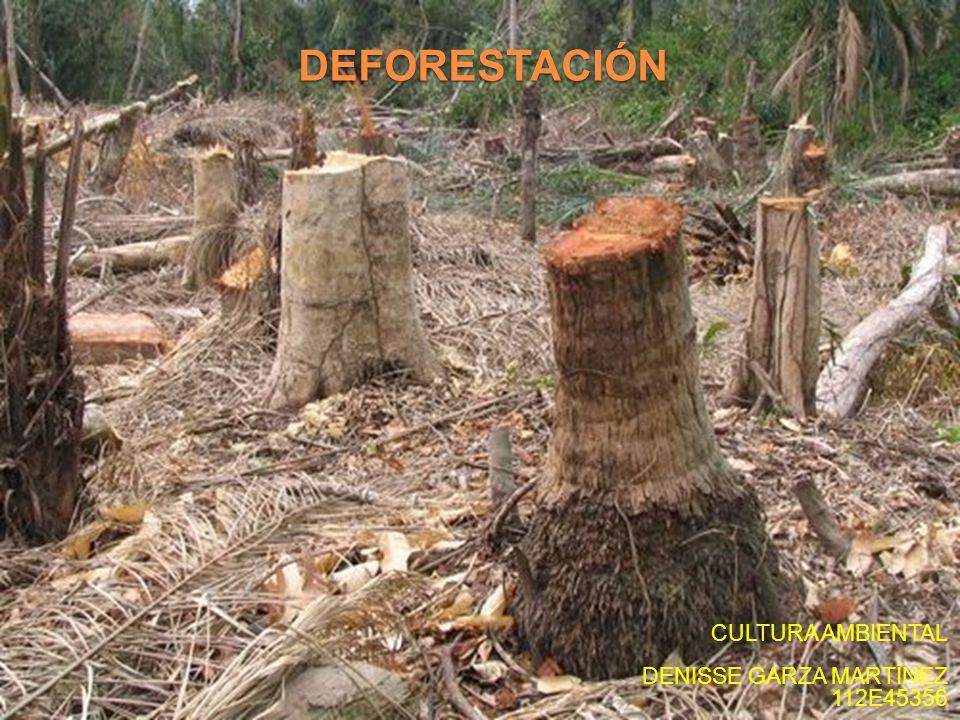 DEFORESTACIÓN CULTURA AMBIENTAL DENISSE GARZA MARTÍNEZ 112E45356