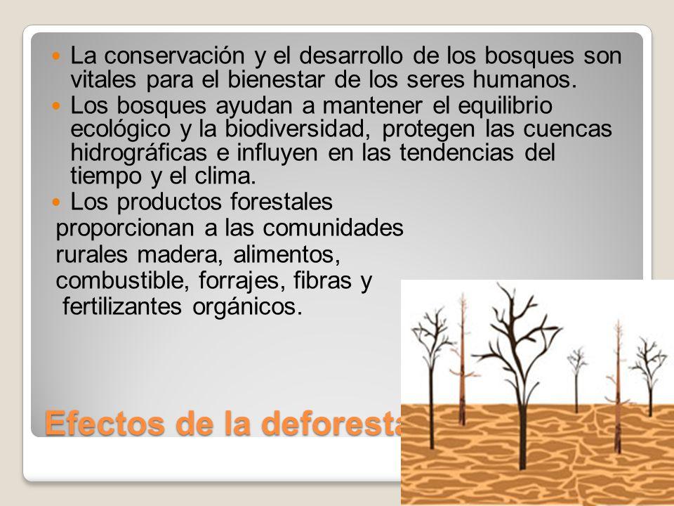 Efectos de la deforestacion La conservación y el desarrollo de los bosques son vitales para el bienestar de los seres humanos.