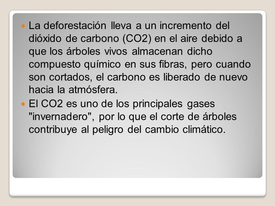 La deforestación lleva a un incremento del dióxido de carbono (CO2) en el aire debido a que los árboles vivos almacenan dicho compuesto químico en sus fibras, pero cuando son cortados, el carbono es liberado de nuevo hacia la atmósfera.