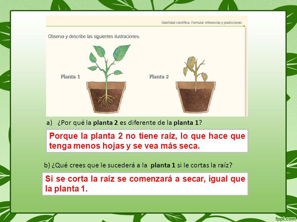 a)¿Por qué la planta 2 es diferente de la planta 1.