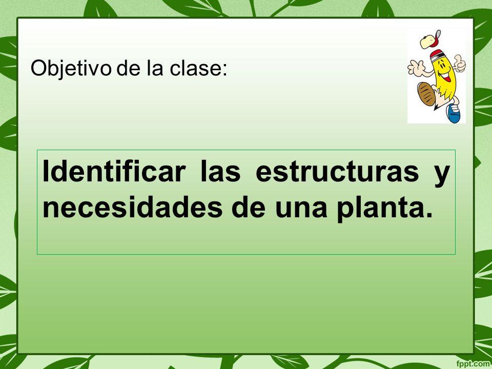 Identificar las estructuras y necesidades de una planta. Objetivo de la clase:
