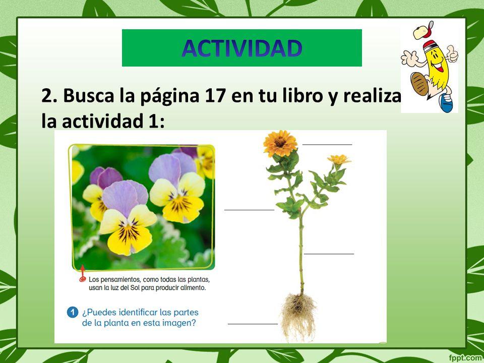 Síntesis de la clase Las plantas están formadas por tres estructuras principales: raíz, tallo y hojas.